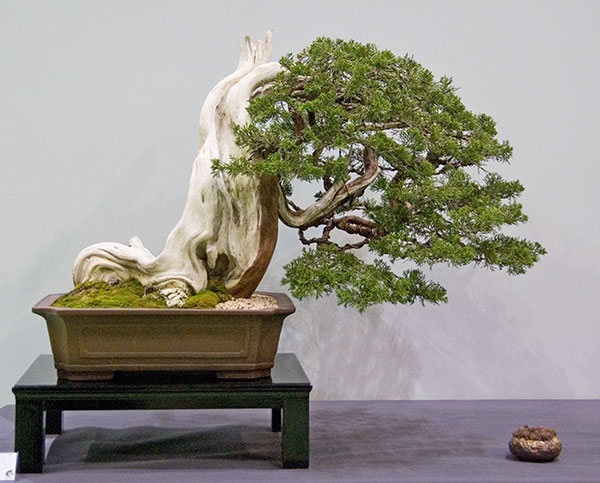 Bonsai Photo of the Day 10-2-2018
