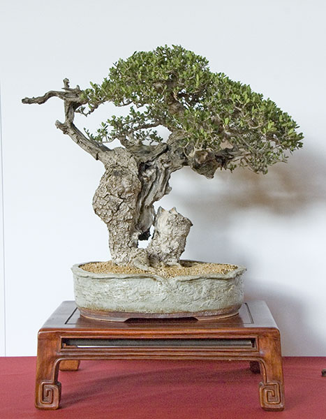 Bonsai Photo of the Day 10-22-2018