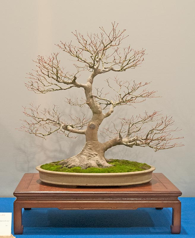 Bonsai Photo of the Day 10-23-2018