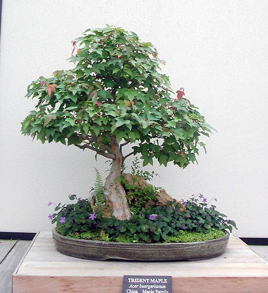 Bonsai Photo of the Day 10-25-2018