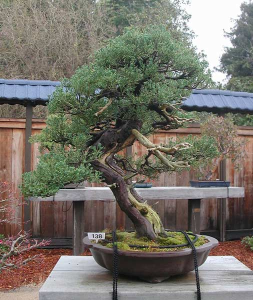 Bonsai Photo of the Day 10-26-2018