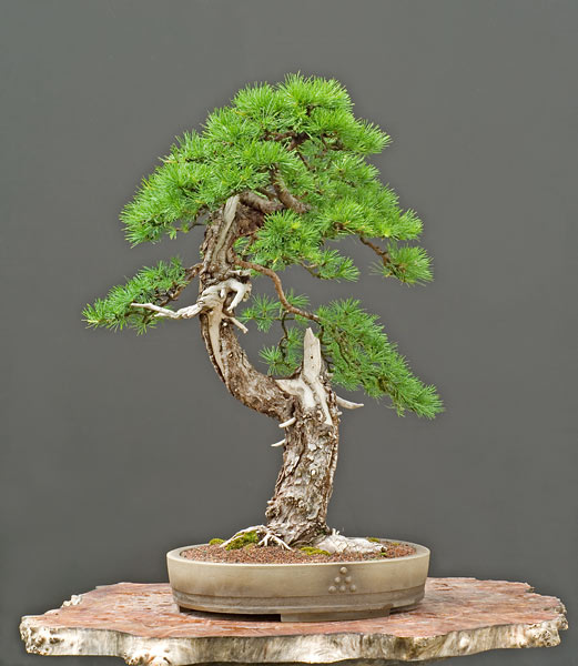 Bonsai Photo of the Day 10-30-2018