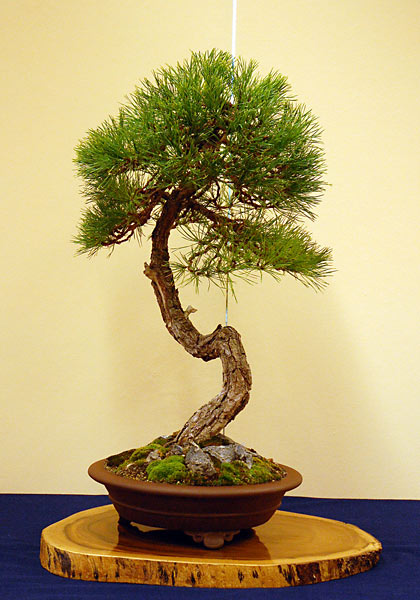 Bonsai Photo of the Day 10-4-2018