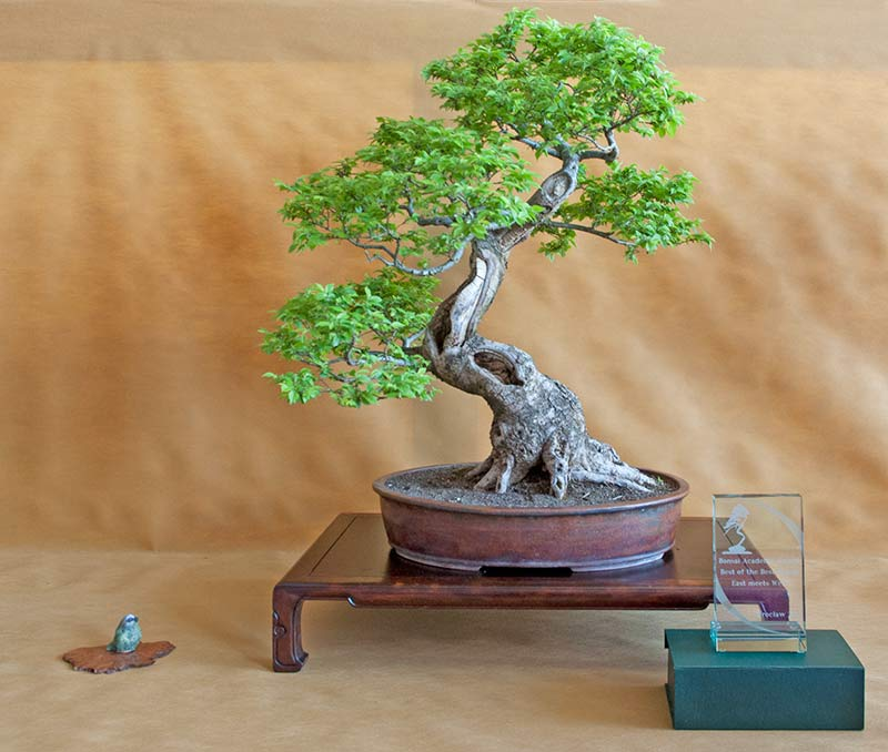Bonsai Photo of the Day 11-1-2018