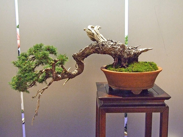 Bonsai Photo of the Day 11-6-2018