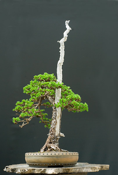 Bonsai Photo of the Day 11-16-2018