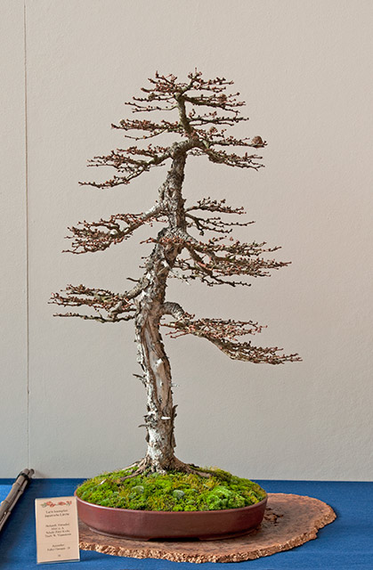 Bonsai Photo of the Day 11-26-2018