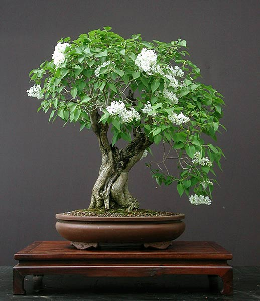 Bonsai Photo of the Day 11-29-2018