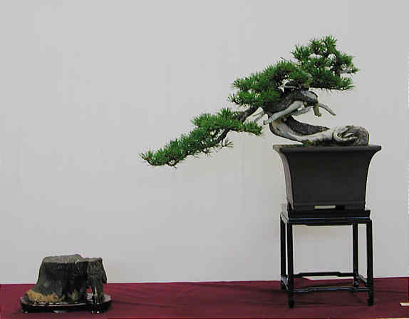 Bonsai Photo of the Day 12-13-2018