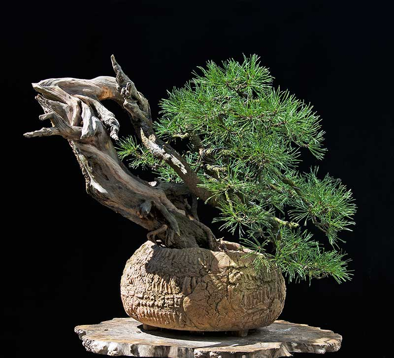 Bonsai Photo of the Day 12-17-2018