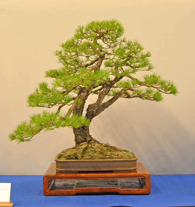 Bonsai Photo of the Day 12-19-2018