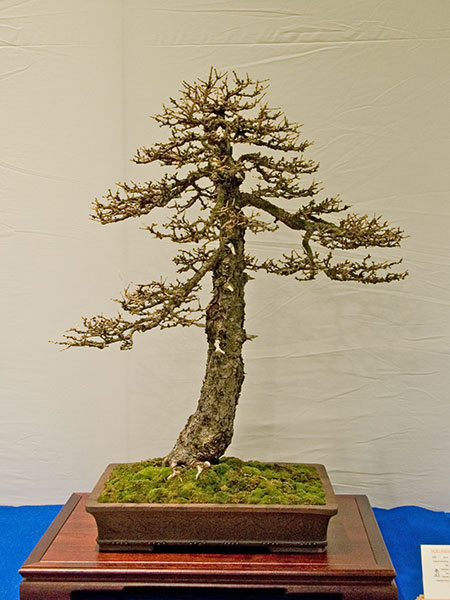 Bonsai Photo of the Day 12-28-2018