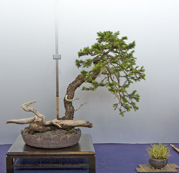 Bonsai Photo of the Day 12-3-2018