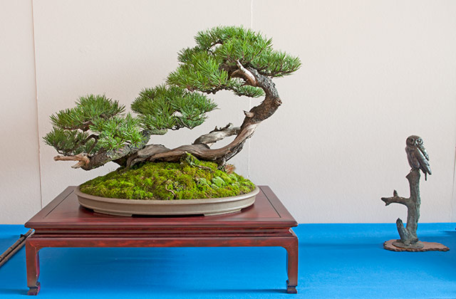 Bonsai Photo of the Day 12-4-2018