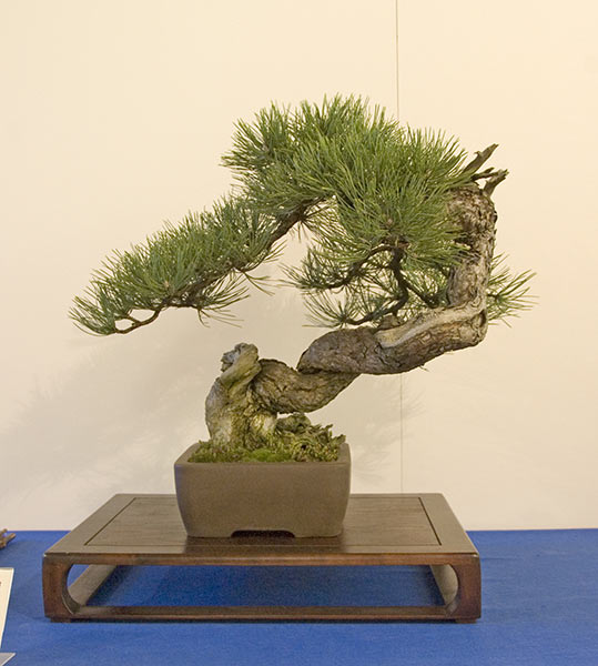 Bonsai Photo of the Day 1-10-2019