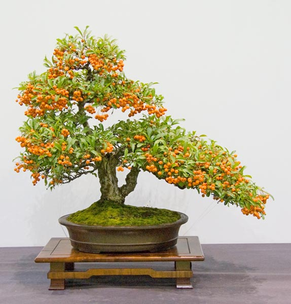 Bonsai Photo of the Day 1-2-2019