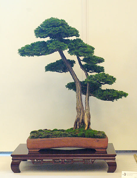 Bonsai Photo of the Day 1-29-2019