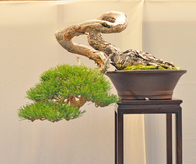 Bonsai Photo of the Day 1-3-2019