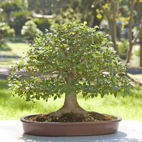 Bonsai Photo of the Day 1-4-2019
