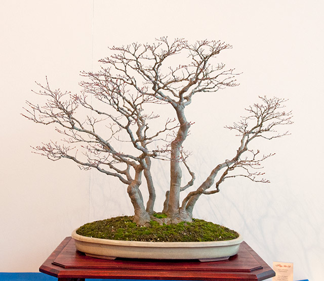 Bonsai Photo of the Day 1-8-2019