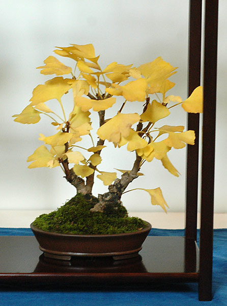Bonsai Photo of the Day 2-12-2019