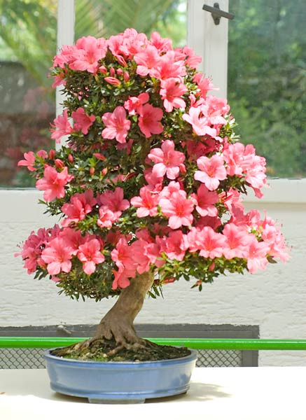 Bonsai Photo of the Day 2-4-219