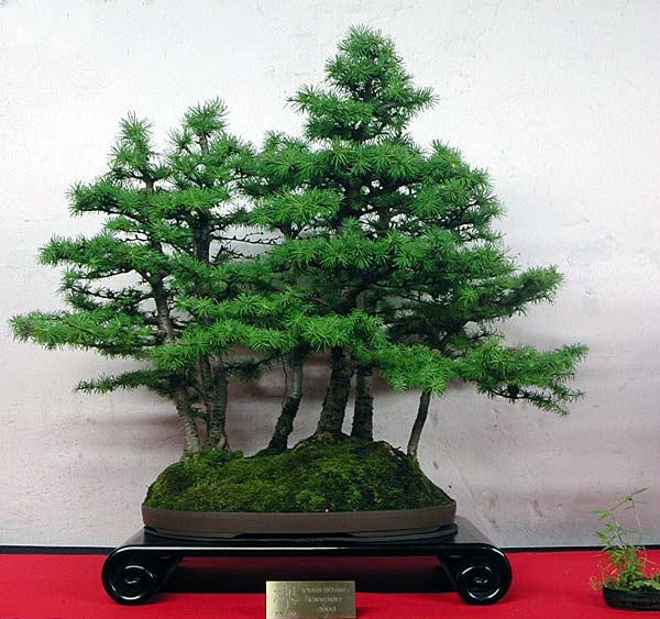 Bonsai Photo of the Day 2-7-2019