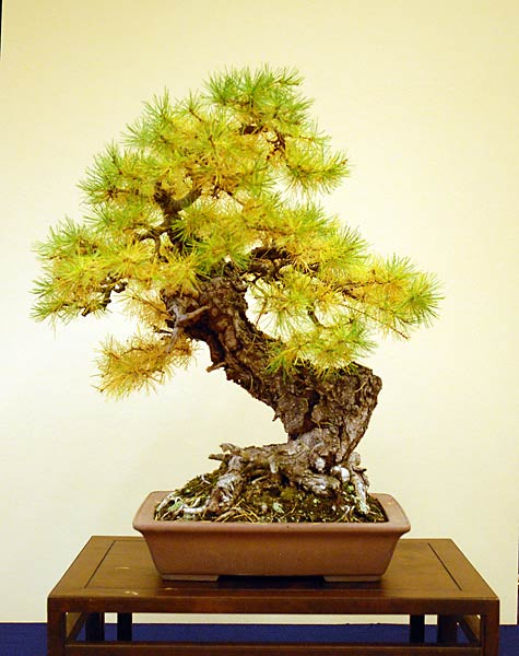 Bonsai Photo of the Day 3-1-2019