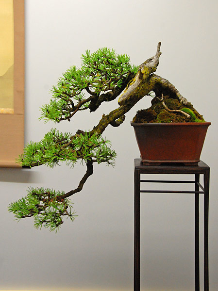 Bonsai Photo of the Day 3-11-2019