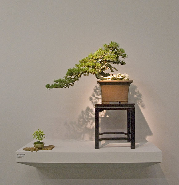 Bonsai Photo of the Day 3-14-2019