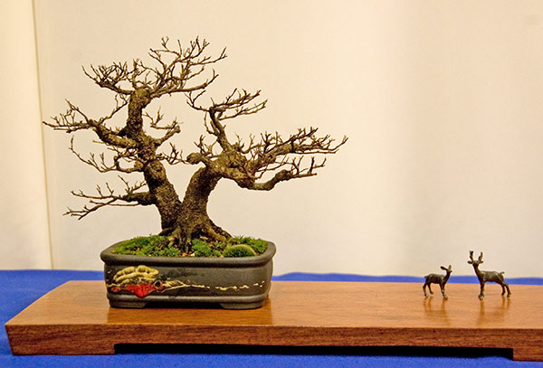 Bonsai Photo of the Day 3-28-2019