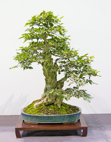 Bonsai Photo of the Day 3-5-2019