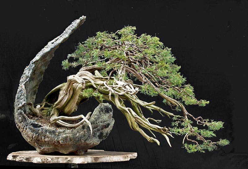 Bonsai Photo of the Day 3-6-2019
