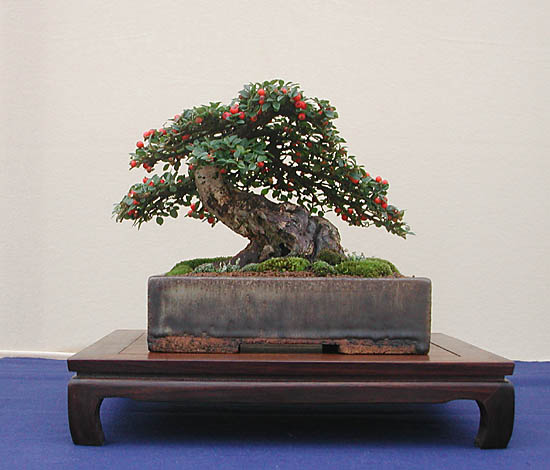 Bonsai Photo of the Day 4-17-2019