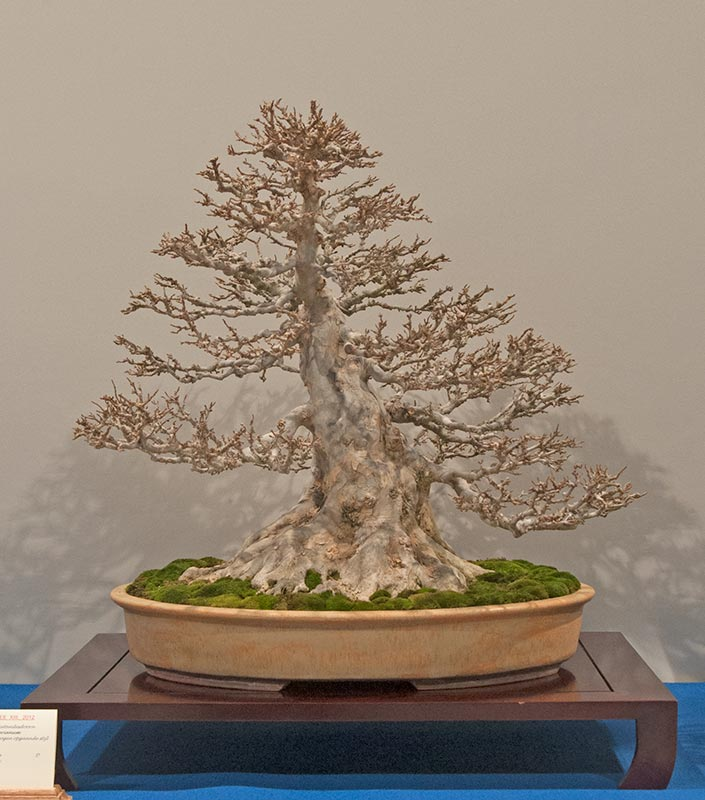 Bonsai Photo of the Day 4-19-2019