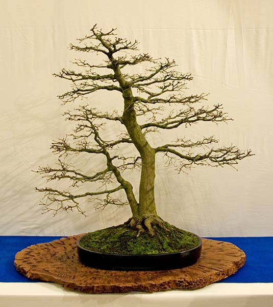 Bonsai Photo of the Day 4-22-2019