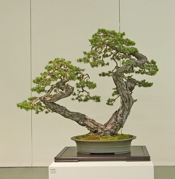 Bonsai Photo of the Day 4-23-2019
