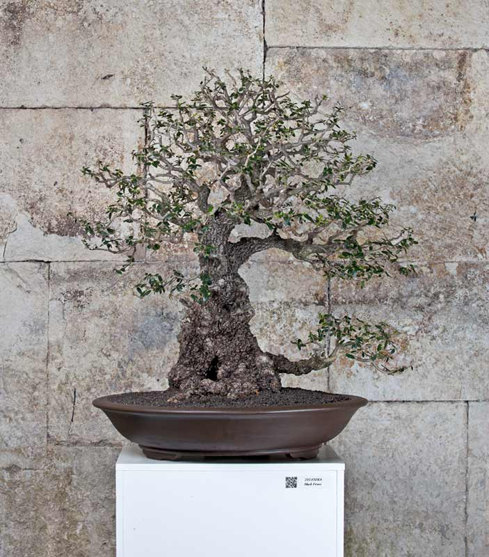 Bonsai Photo of the Day 4-24-2019