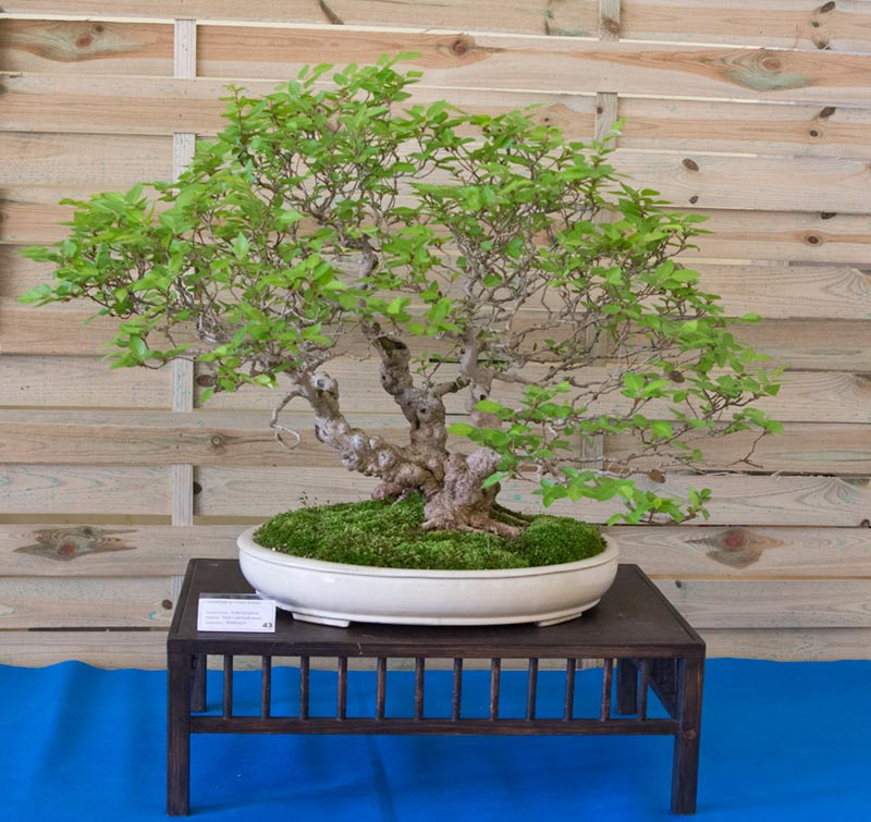 Bonsai Photo of the Day 4-29-2019
