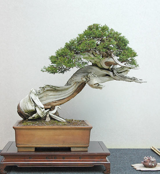 Bonsai Photo of the Day 4-4-2019