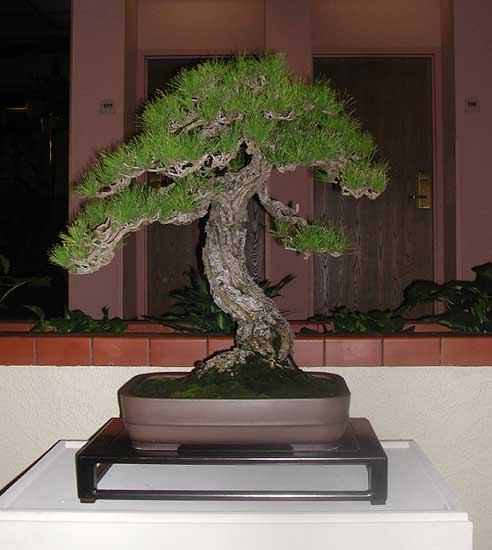 Bonsai Photo of the Day 4-5-2019