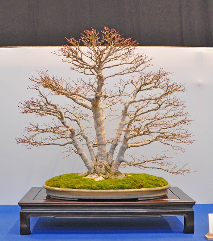 Bonsai Photo of the Day 4-8-2019