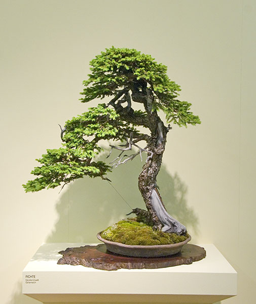 Bonsai Photo of the Day 5-15-2019