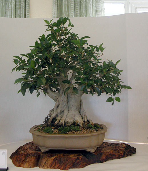 Bonsai Photo of the Day 5-16-2019
