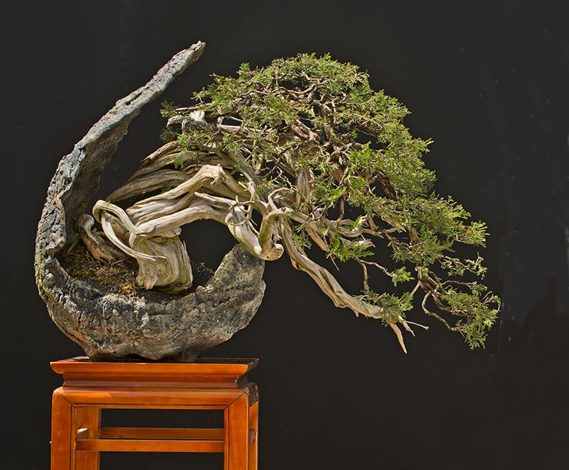 Bonsai Photo of the Day 5-17-2019