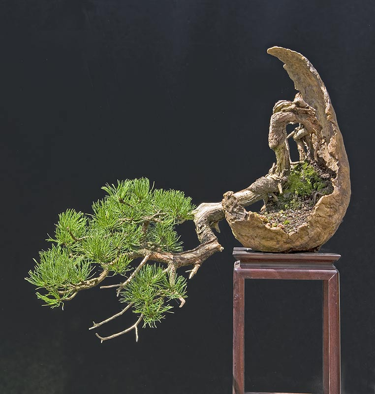 Bonsai Photo of the Day 5-2-2019
