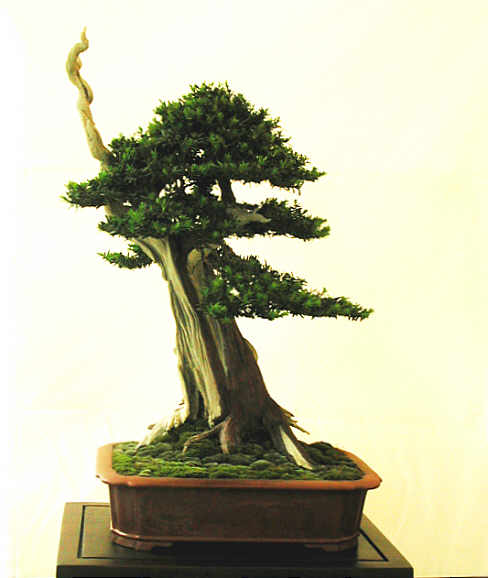 Bonsai Photo of the Day 5-20-2019