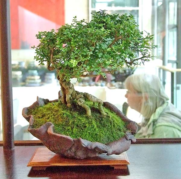 Bonsai Photo of the Day 5-27-2019