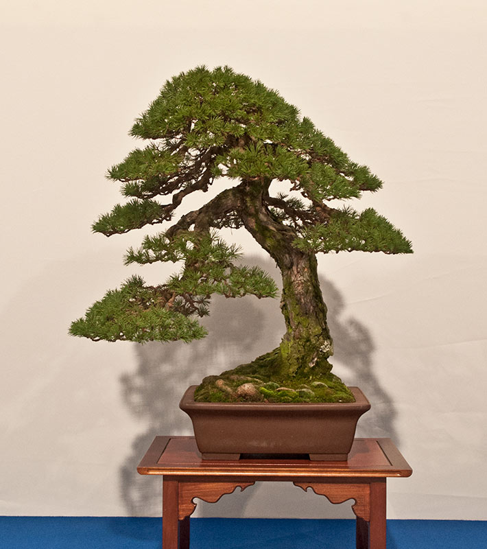 Bonsai Photo of the Day 5-30-2019