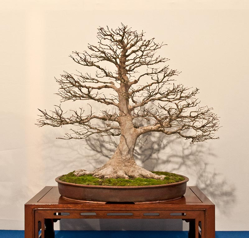 Bonsai Photo of the Day 5-6-2019
